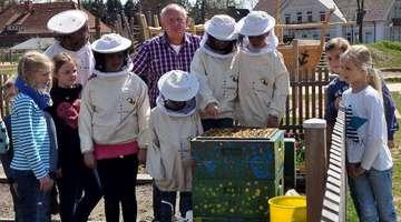 Grundschule Sittensen Bienenvolk gedeiht