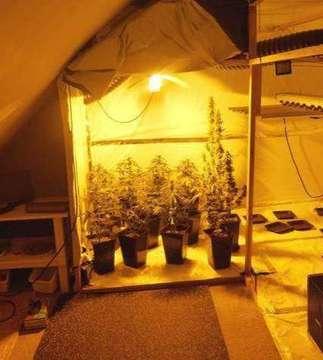 Polizei entdeckt Indoorplantage