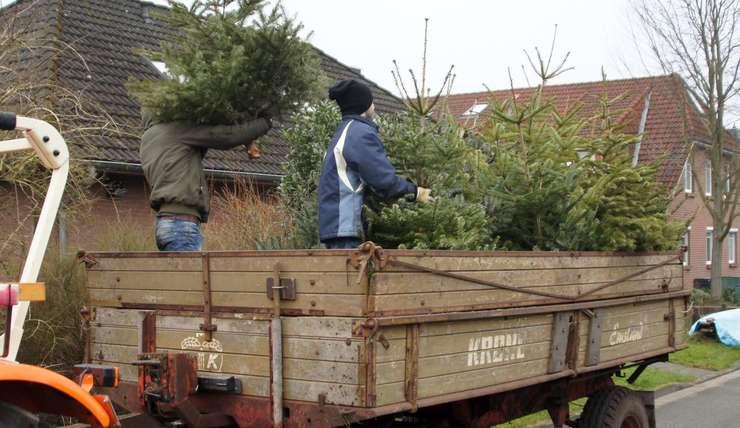 1.000 Bäume transportiert