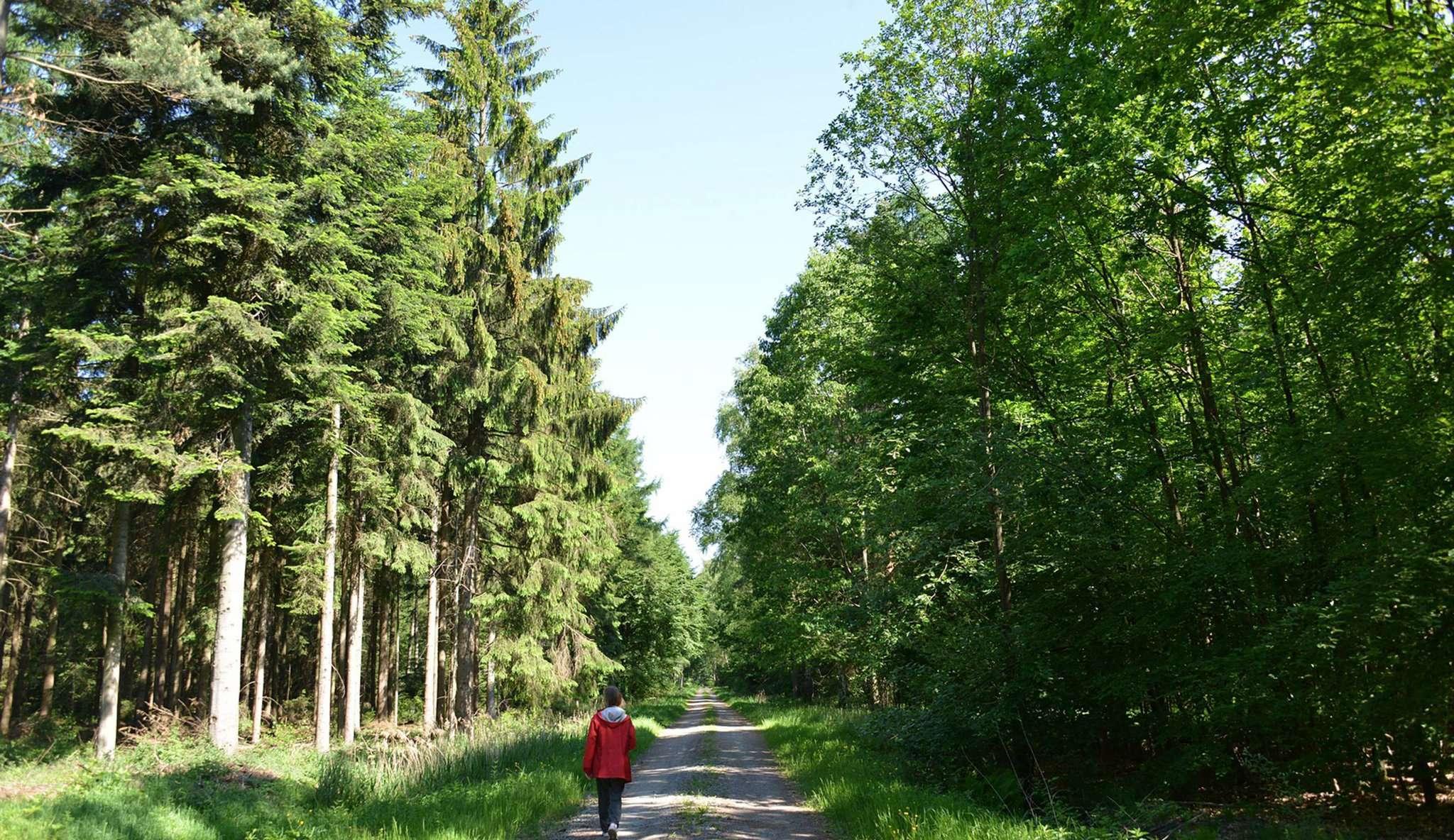 Wald im Umbruch: der Thörenwald. Foto: Joachim Looks