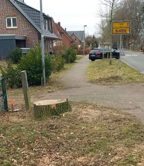 In einer kurzfristig angesetzten Maßnahme wurde von der Gemeinde Tiste auf Kalber Gebiet eine Eiche für die Herstellung einer Erschließungsstraße für das neue Baugebiet gefällt.