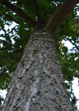 Diskussion im Ausschuss Soll Sottrum Bäume per Satzung schützen