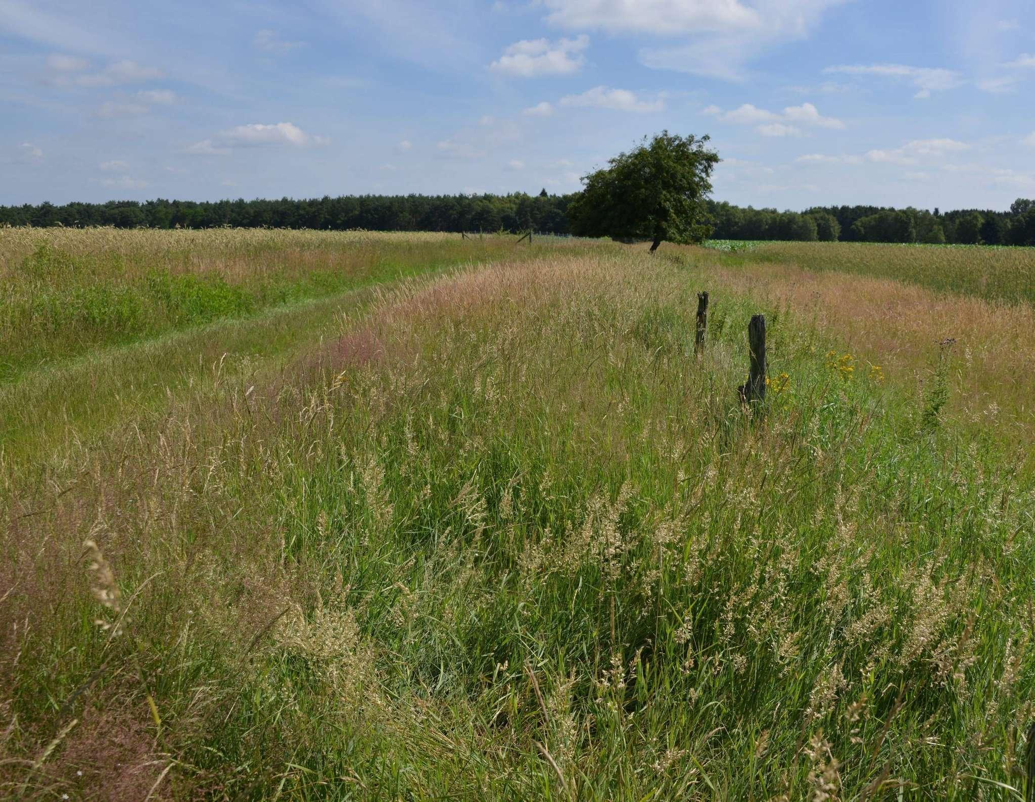 In der Hellweger Feldmark gibt es wieder breite Wegeseitenränder. Foto: Joachim Looks
