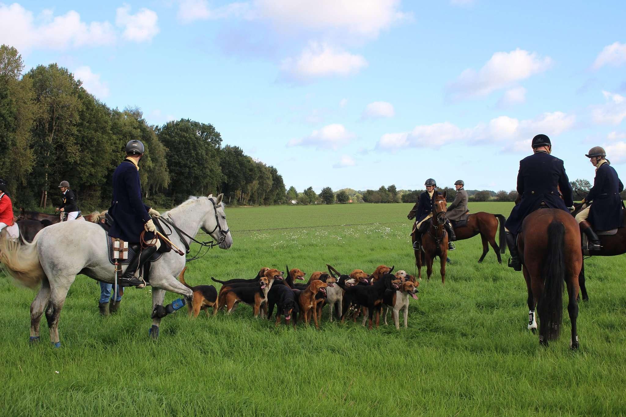 Die Reiter folgen der Böhmer Harrier-Meute. Für einige Zuschauer sind die Hunde die heimlichen Stars der Veranstaltung.