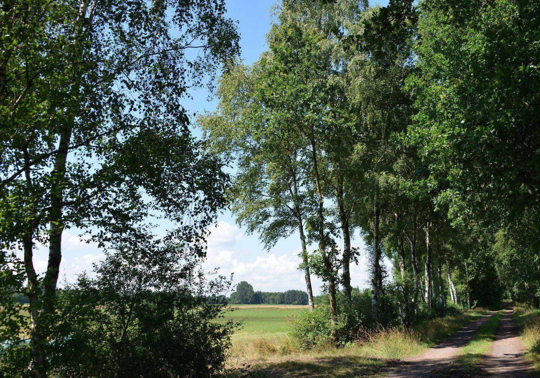 Birken u2013 wie hier nordöstlich von Fintel u2013 sind Pionierbäume. Foto: Joachim Looks
