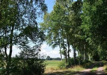 Zartgrüne Frühlingsbotin Birke  ein verkannter Baum der mehr kann  Von Christiane Looks