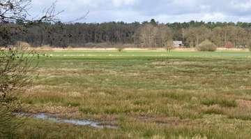Biotopkartierungen sorgen für bunten Bild an Lebensräumen