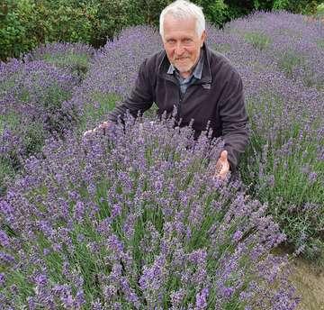 Wie Lavendel aus Stapel in der Gemeinde Horstedt zum Exportschlager wurde  Von Klaus Müller