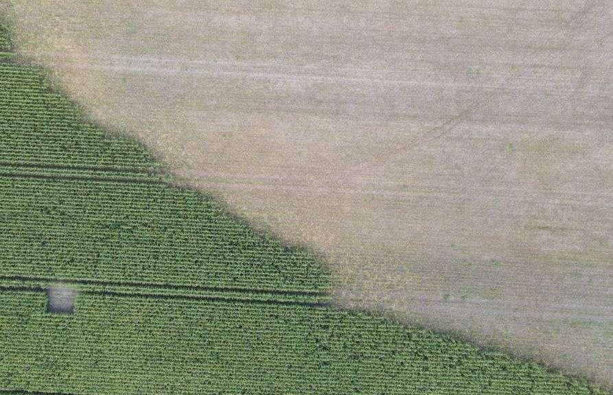 Eine Luftaufnahme aus dem betroffenen Bereich lässt grob erahnen, wie groß der Schaden ist: Rund 2,5 Hektar haben die Tiere vom Maisfeld weggefressen.
