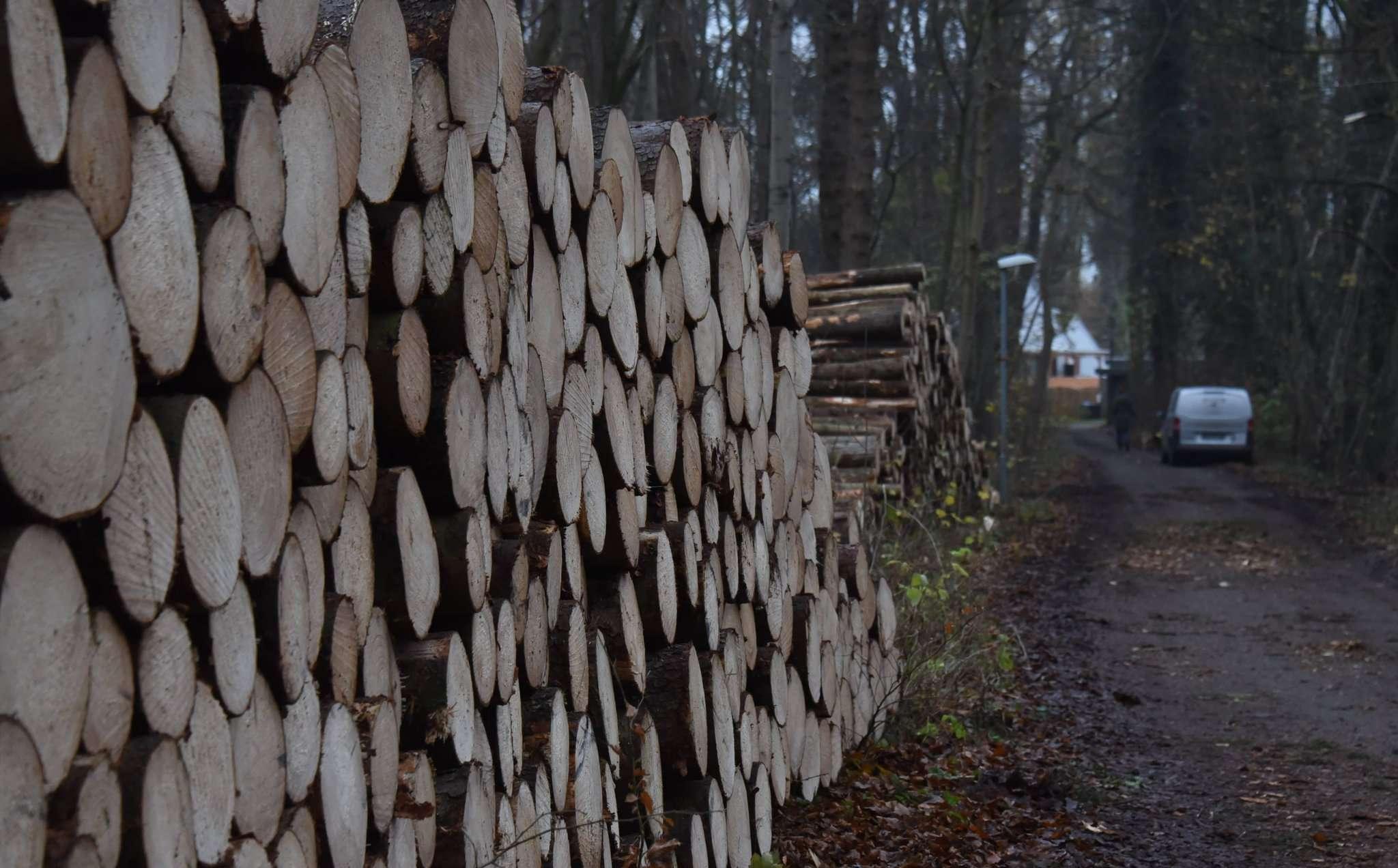 Als Spaziergänger im Dezember den Weg am Gemeindewald in Stuckenborstel nutzten, staunten sie angesichts des Kahlschlags und gestapelter Stämme nicht schlecht. Der Rat hat nun die Wiederaufforstung beschlossen.