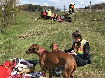 Unfall Beamte betreuen Hunde