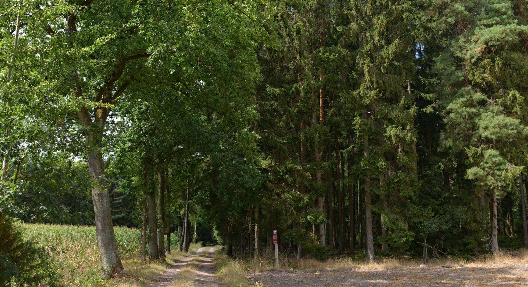Naturschutzgebiet Ottinger Ochsenmoor bietet ein nicht standorttypischem Nadelforststück. Foto: Joachim Looks