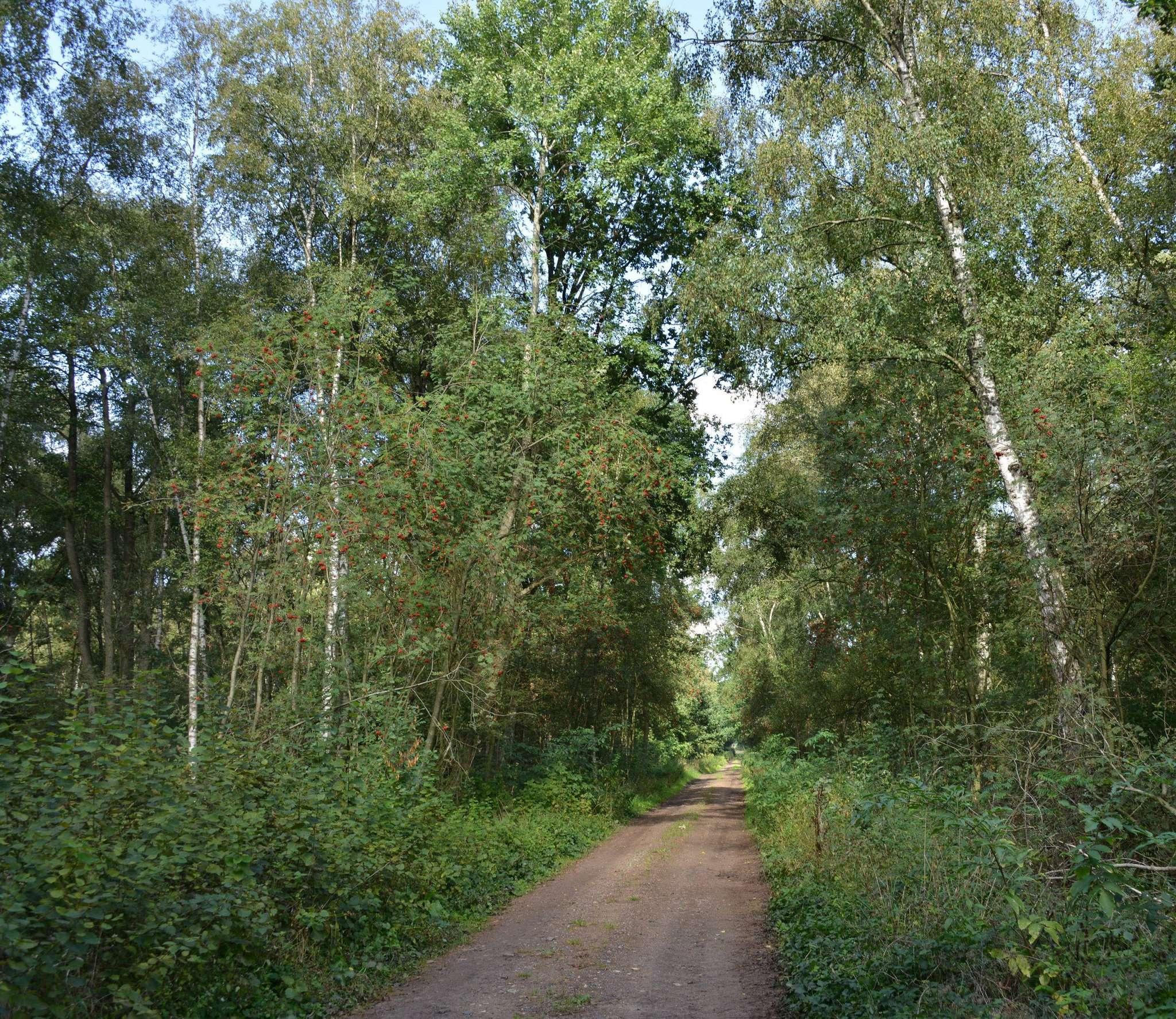 Auch wenn es auf den ersten Blick nicht so scheint: bei Grapenmühlen gibt es noch naturnahen Moorboden. Foto: Joachim Looks