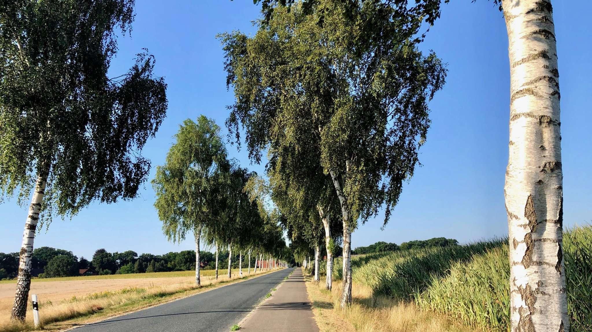 Strahlende Sonne, Hitze - das Sommerwetter ist schön, führt aber zu großer Trockenheit.