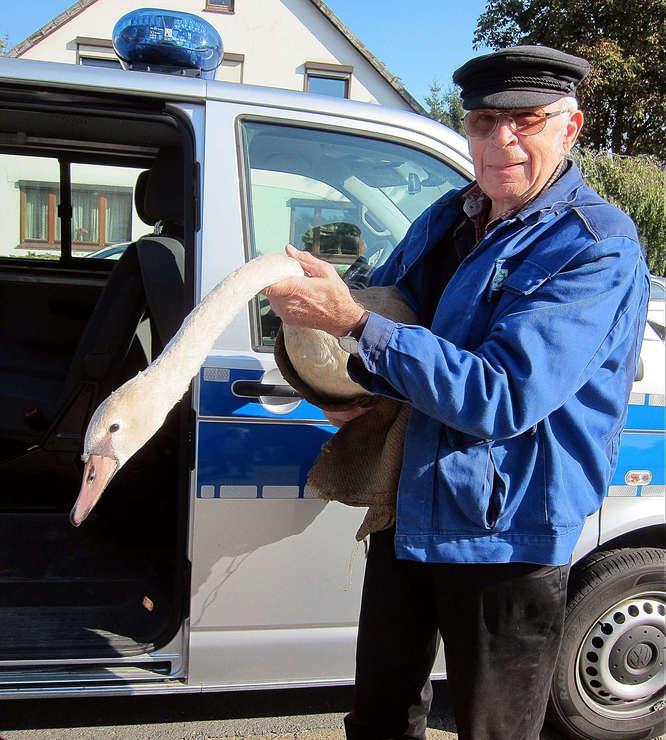 Schwan im Polizeiwagen