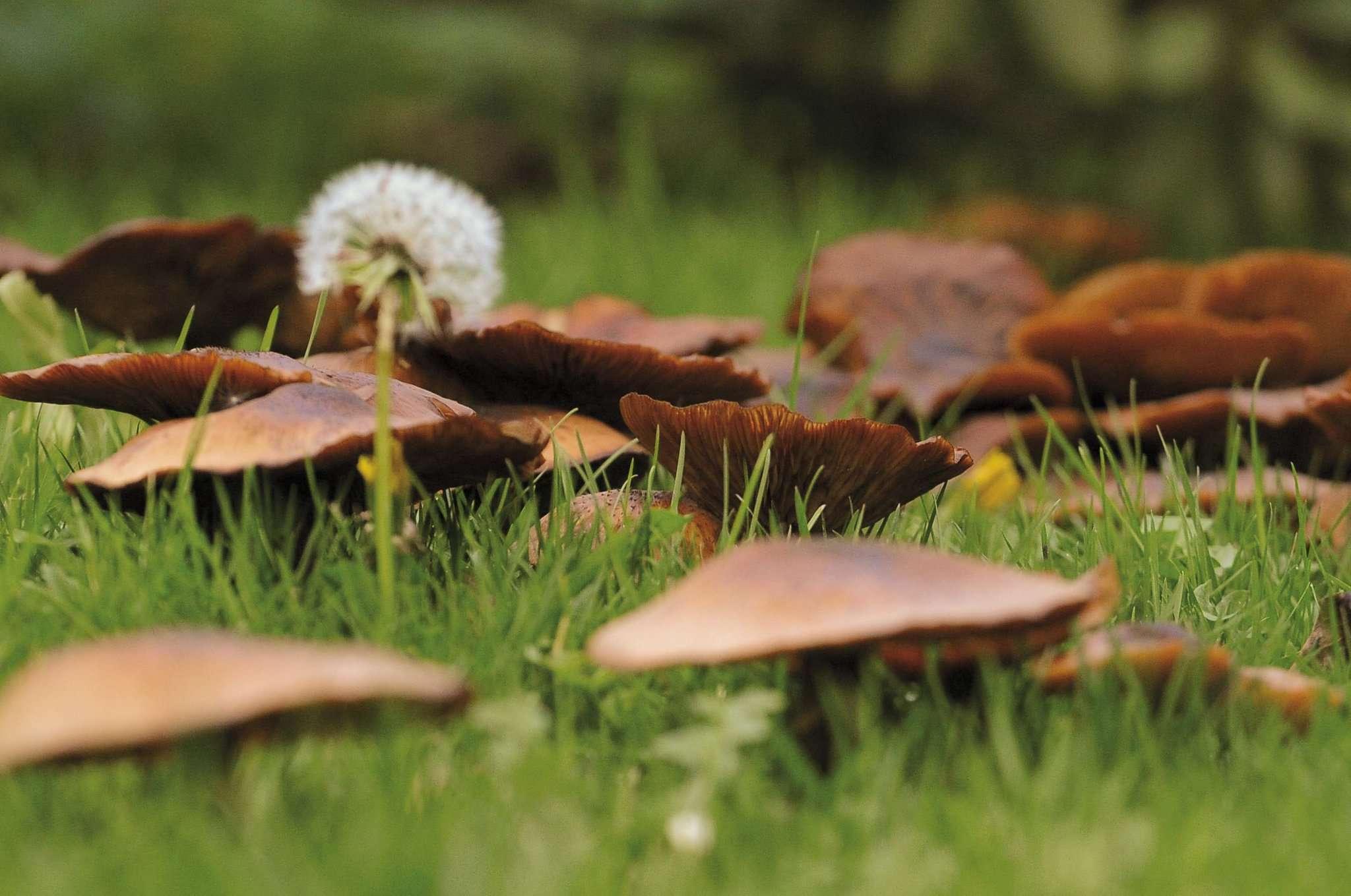 Die Natur treibt aktuell florale Kapriolen. Foto:Tobias Woelki