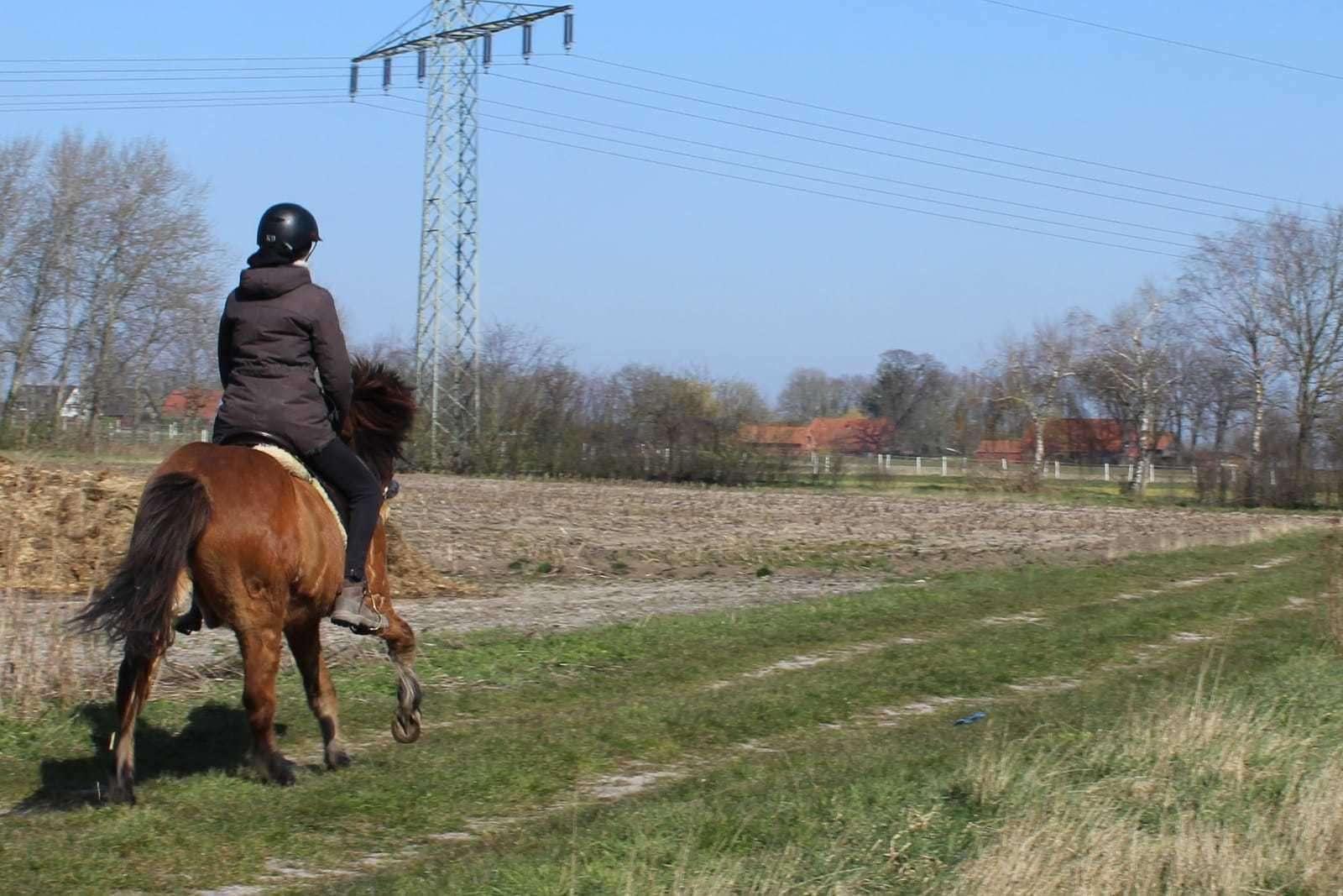 Auch in Corona-Zeiten sollten die Pferde bewegt werden. Foto: Manon Blaak