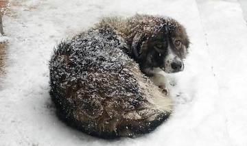 Schicksal der Straßenhunde