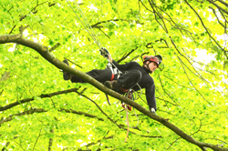 Hanseatic Treework