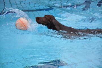 Ab-Badetag mit Hund im Ronolulu