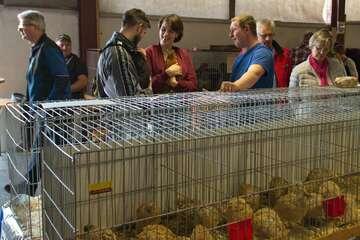 Geflügelmarkt Fintel